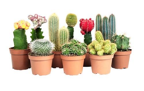 botanisch wonen budget interieur